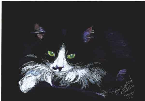 coloured pencil drawing of black and white cat on black cartridge paper